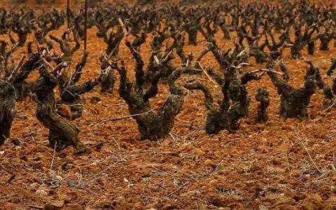 Ribera de Duero GlamGlam 1 480x300 - Ribera de Duero