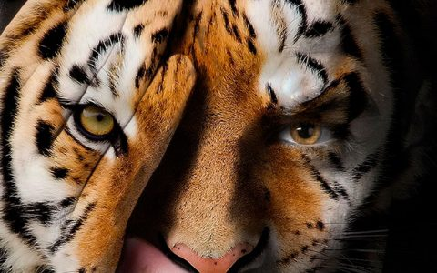 portada animal print 480x300 - Una revolución muy salvaje