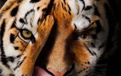 portada animal print 480x300 - Una revolución muy salvaje